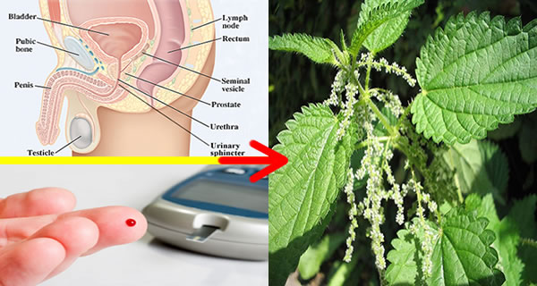 IT IS ALSO KNOWN AS A GIFT FROM GOD: REDUCES PROSTATE, PREVENTS CANCER, TREATS EVEN DIABETES
