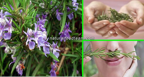 Smell Of Rosemary Can Boost Memory