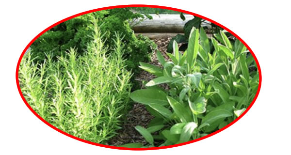 DOCTORS CONFIRM THAT THE CARTILAGES OF THE HIP AND KNEES ARE REGENERATED IN A WEEK USING THE MIXTURE OF THESE HERBS
