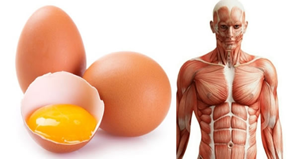 Eat Three Eggs Each Day And See What Happened