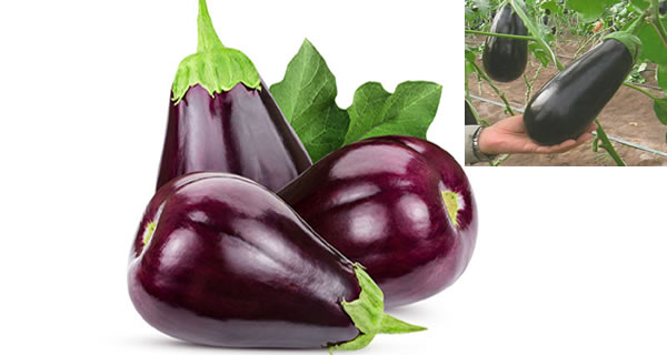10 Excellent Reasons Why You Need To Eat More Eggplant!